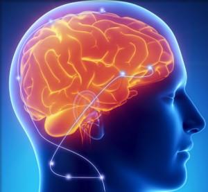 brain, blue skull