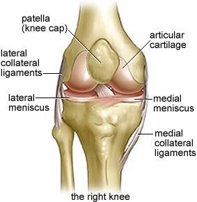 knee lig