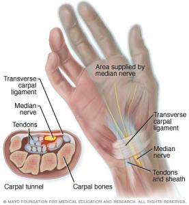 carpal tunnel anat